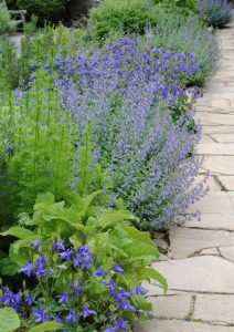 Repeat-plant-colour-to create-rhythm-to-planting