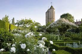 White Rose Garden1