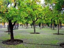 Patio de los Naranjos ornage trees irrigation spain garden design